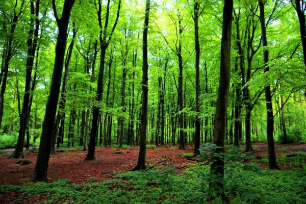 A woodland